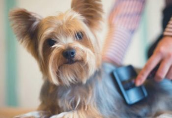 Navajanje psa na domačo nego 1-min