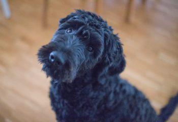 Nega psa - kako in zakaj